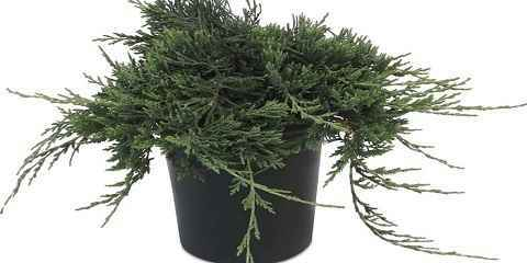 Decorate Your Home Yard With Blue Rug Juniper Floracompass