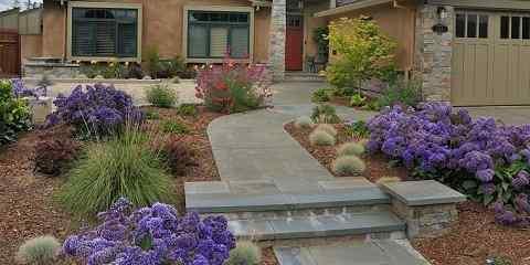 lavender bloom time