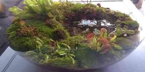 carnivorous plant vivarium