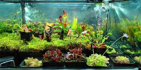 growing indoor carnivorous house plants garden