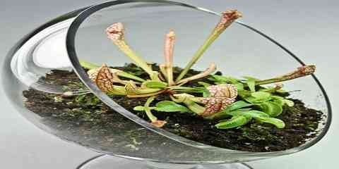 how to make or build and setting up a terrarium for carnivorous plants