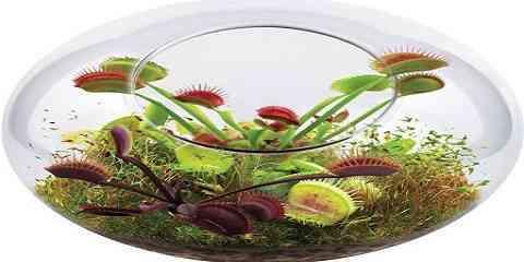 tropical carnivorous plant terrarium