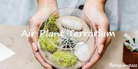 air plant terrarium